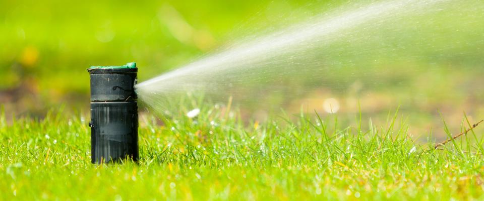 Économiser de l'eau dans le jardin